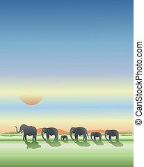 plaines, éléphants