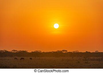 plaines, levers de soleil