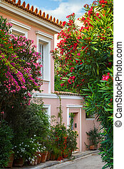 Plaka neighborhood in Athens. - Street with a lot of flowers...