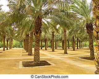 Plam garden - Palm garden in the Riyadh city, Saudi Arabia...