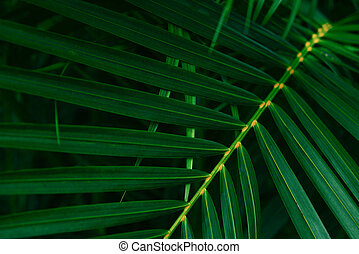 Plam leaves natural green pattern on dark background / Leaf beautiful in the tropical forest plant jungle