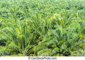 plam oil from plantation background