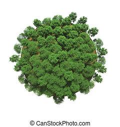 planète, petit, arbres verts