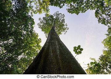 planète verte, concept, gigantesque, arbre, atteindre, à, ciel