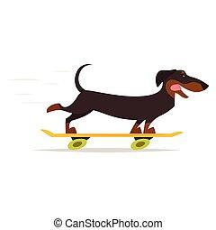 planche roulettes équitation, chien basset allemand