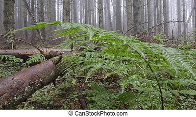 plancher, forêt, fougères