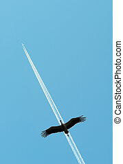 plane and a stork