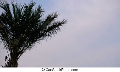 Plane Flying high in the Sky against a background of Silhouettes of Palm Tree