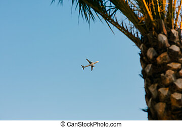 Plane in the sky. Shooted from the ground. Flying over the palm