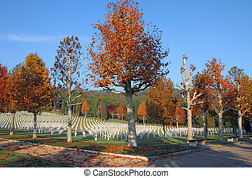 plane trees in fall colors on Florence American Cemetery