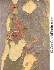 Planetree bark as a natural camuflage texture