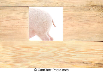plank, varken