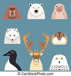 plano, ártico, Conjunto,  animal, iconos