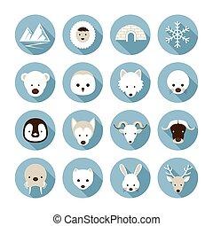 plano, ártico, conjunto, animales, iconos