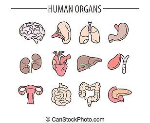 plano, conjunto, iconos, médico, aislado, vector, humano, órganos