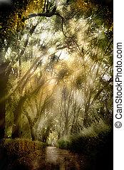 plano de fondo, bosque, con, luz, y, sombras