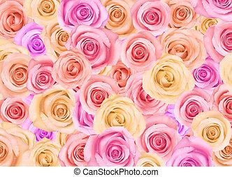 plano de fondo, de, rosas