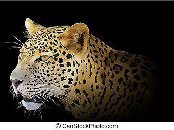 plano de fondo, leopardo, negro