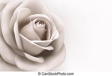plano de fondo, vector, vendimia, illustration., rosa, rose...