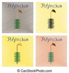 plano, estilo, asamblea, naturaleza, polytrichum, planta, ...