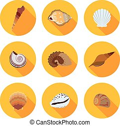plano, iconos, conchas marinas