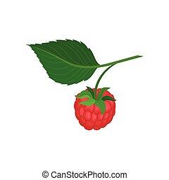 plano, natural, jardín, maduro, dulce, fruit., leaf., jugoso, comida., vector, puntilla, ahorcadura, berry., verde, frambuesa, icono