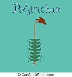 plano, planta, naturaleza, polytrichum, ilustración, plano ...