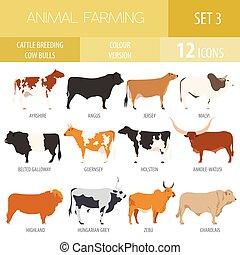 plano, vaca, set., casta, toros, breeding., diseño, ganado, ...