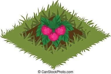 planté, isométrique, jardin, lit, buisson, fruit, framboise, dessin animé