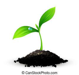 Plant, 10eps