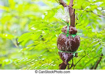 Plant a tree garden