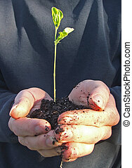 Plant a tree - Hands cup a seedling ready to plant