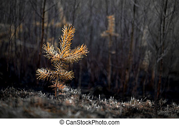 plant after fire