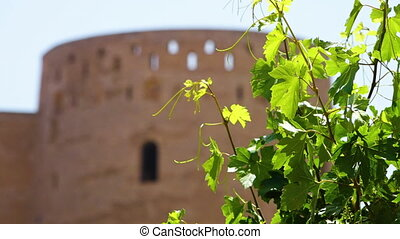 Plant and a fortress - A shot of a green leafy flower in...
