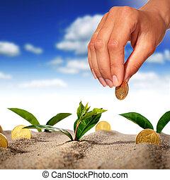 Plant and money.