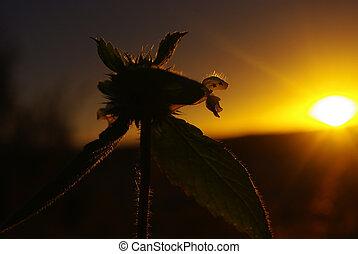 Plant beautifully illuminated by the sunset.