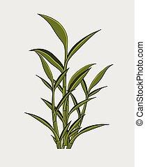 plant, bladeren, gelukkig, bamboe