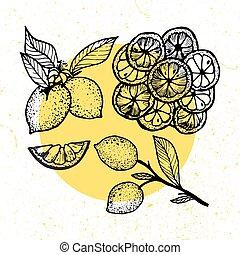 plant, blossom , bladeren, -, illustratie, hand, vector, verzamelingen, getrokken, lemons.