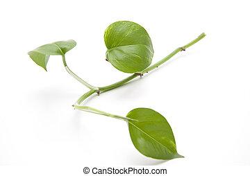Plant branch