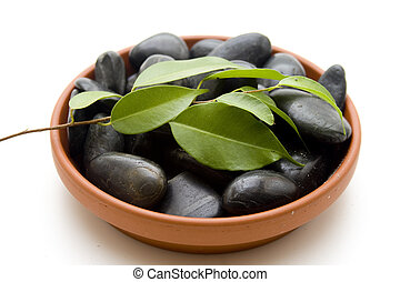 Plant branch with stones