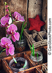 Plant breeding in the spring - Flowering branch of Orchid...