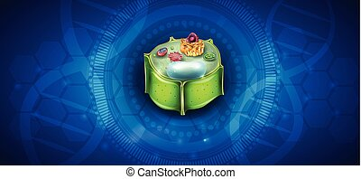 Plant Cell structure, cross section of the cell detailed...