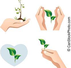 plant, concept, ecologisch, groene, holdingshanden