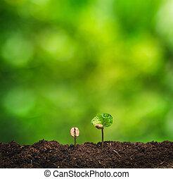 plant, concept, kiemplant, natuur, boompje, koffie