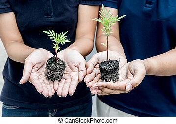 plant, concept, leven, milieu, boompje, aarde, sparen
