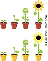 plant, concept, zonnebloem, vector, groei, stadia