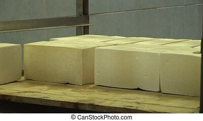 Plant for the production of cheese. Cheese spread on a table