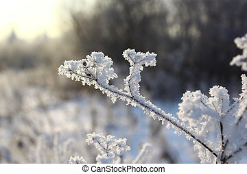 Plant frost in close-up