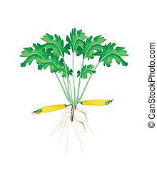 plant, gele achtergrond, fris, witte , zucchini