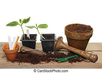plant, gereedschap, seedlings